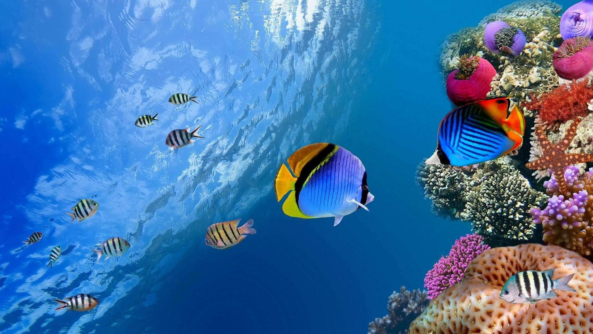 Tropical Fish Wallpapers Top Free Tropical Fish Backgrounds