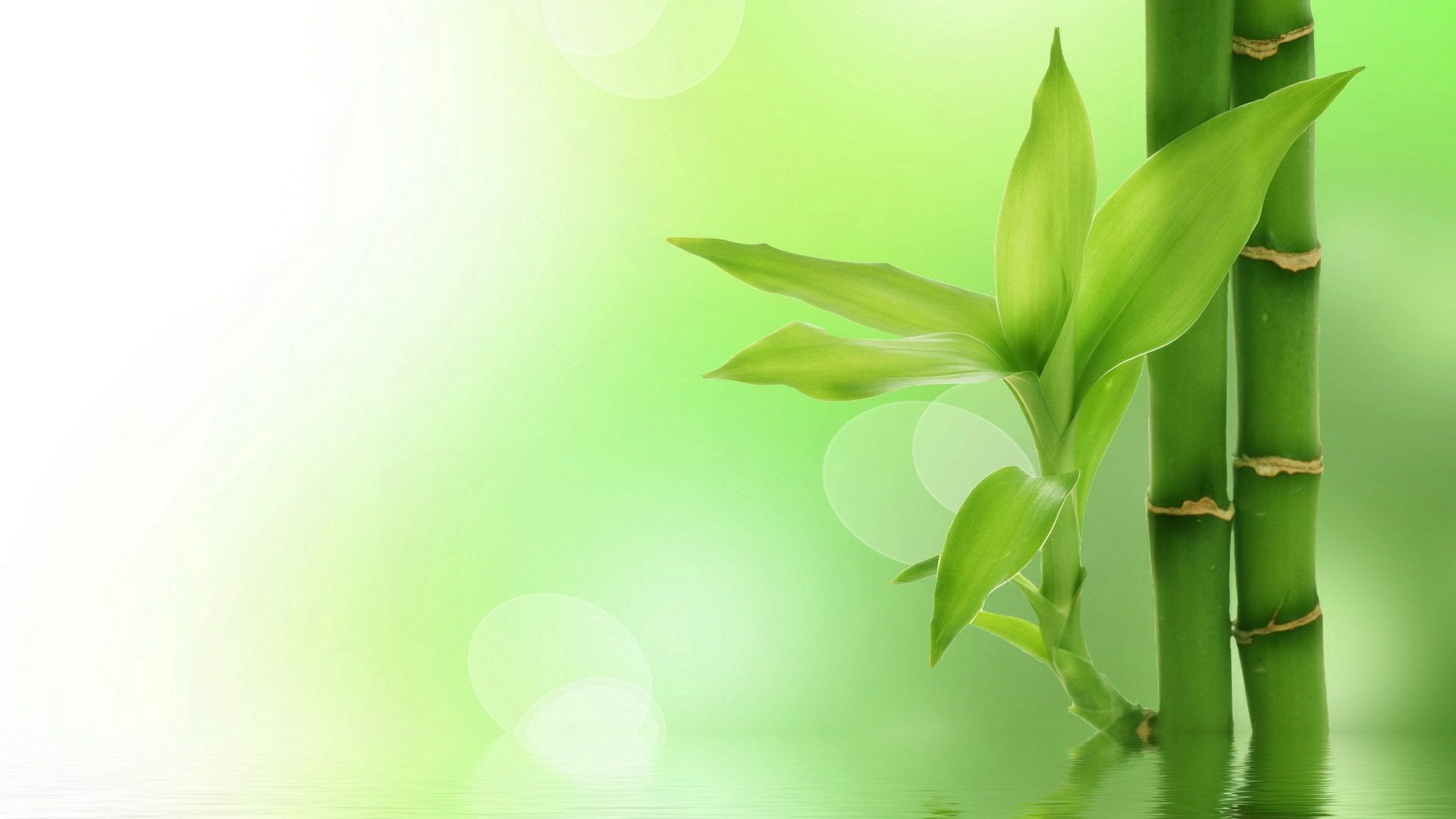 Green Herbal Wallpaper Hd