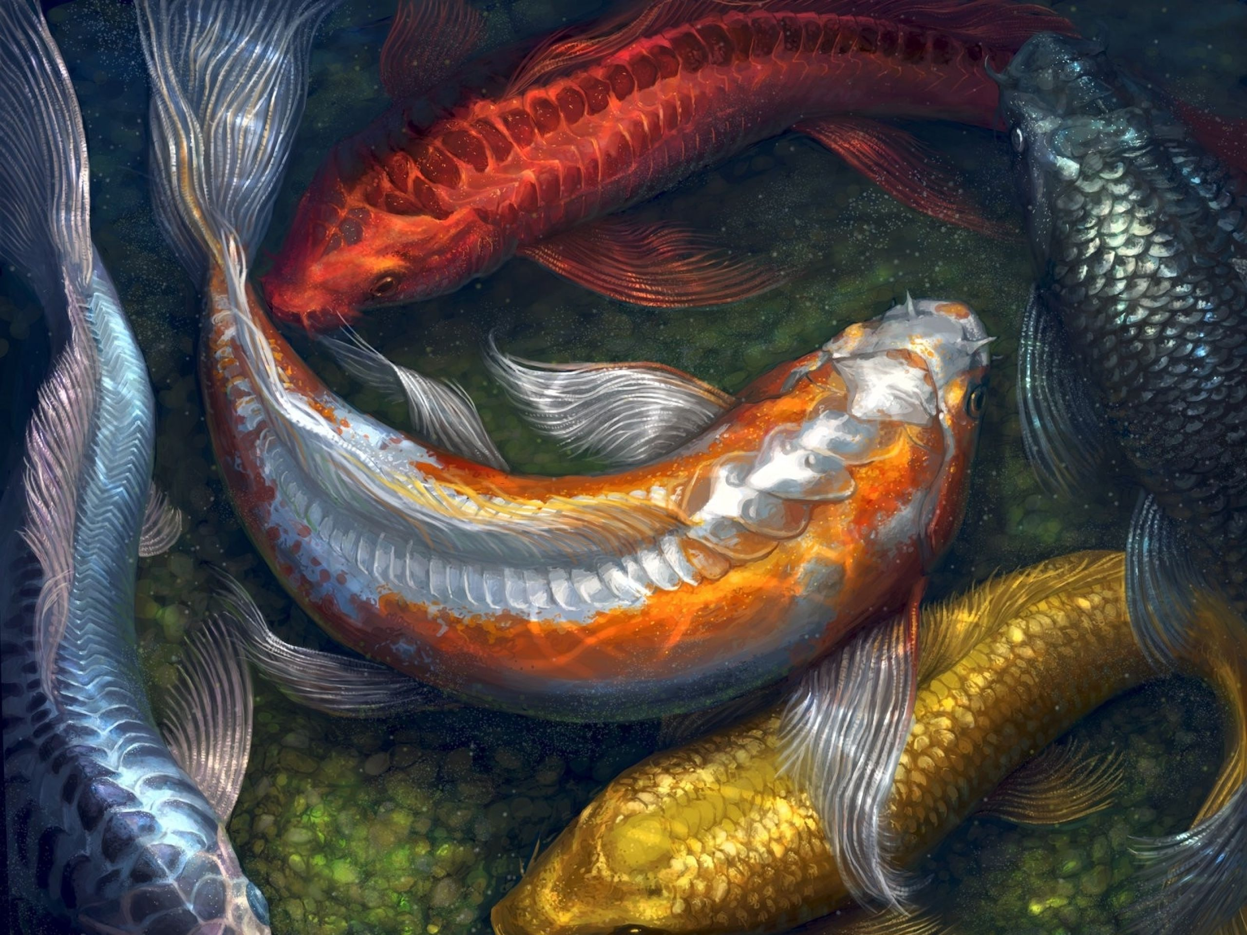 47 best free koi pond wallpapers wallpaperaccess