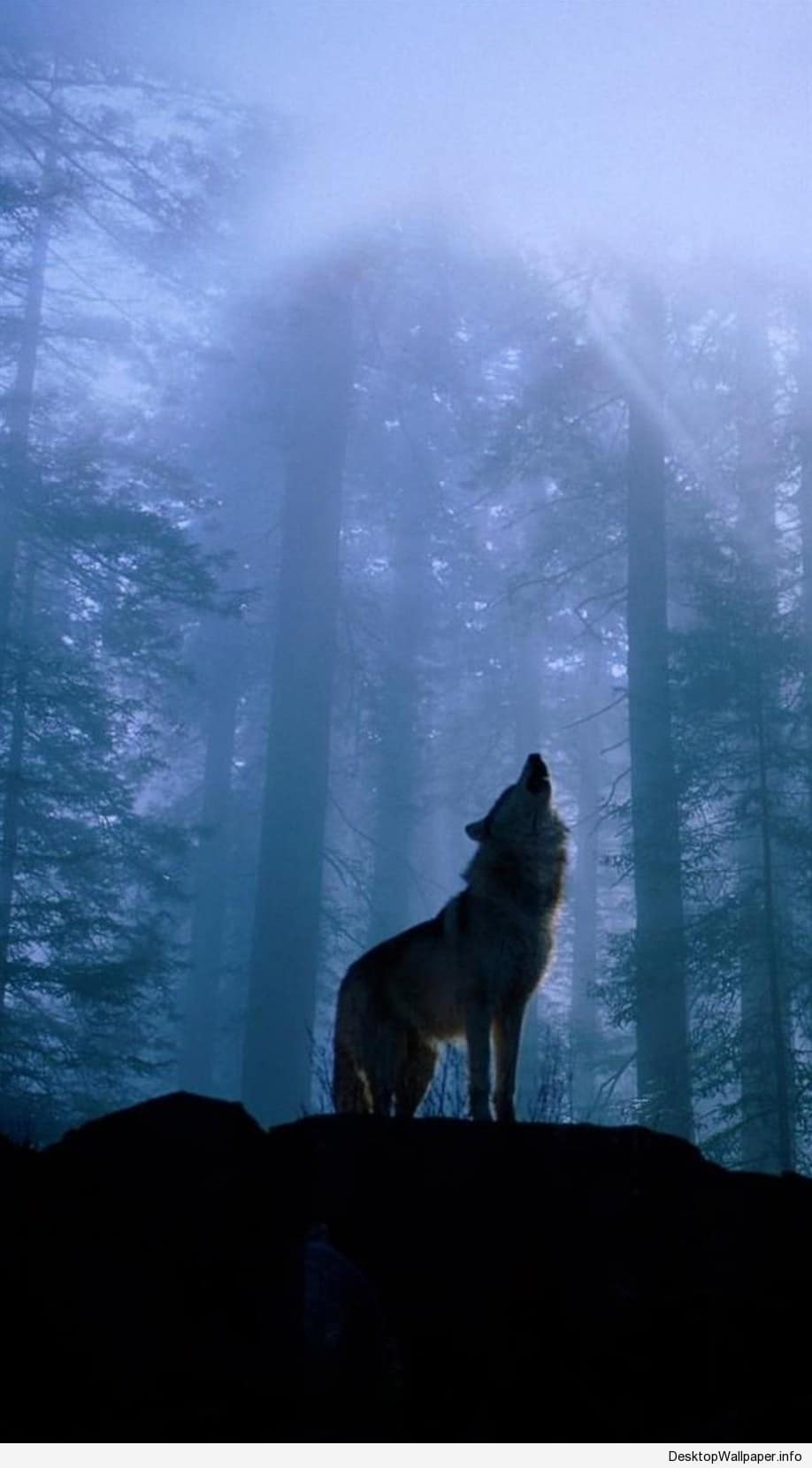Wolf wallpapers top free wolf backgrounds wallpaperaccess - Bet wallpaper ...