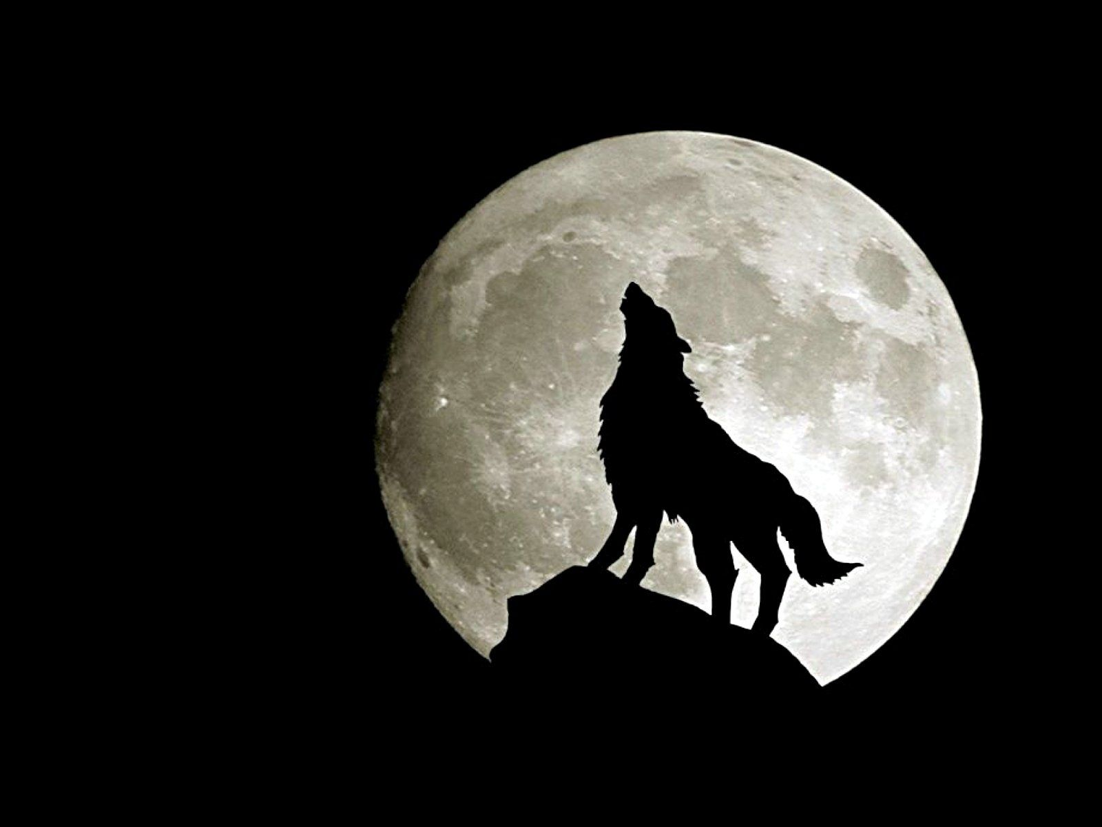 38 Best Free Wolf Moon Wallpapers Wallpaperaccess