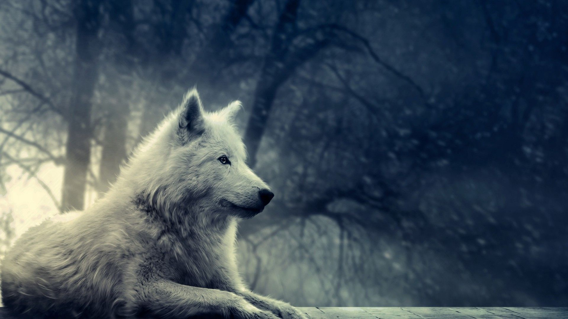 Most Beautiful Hd Wolf Wallpapers Top Free Most Beautiful