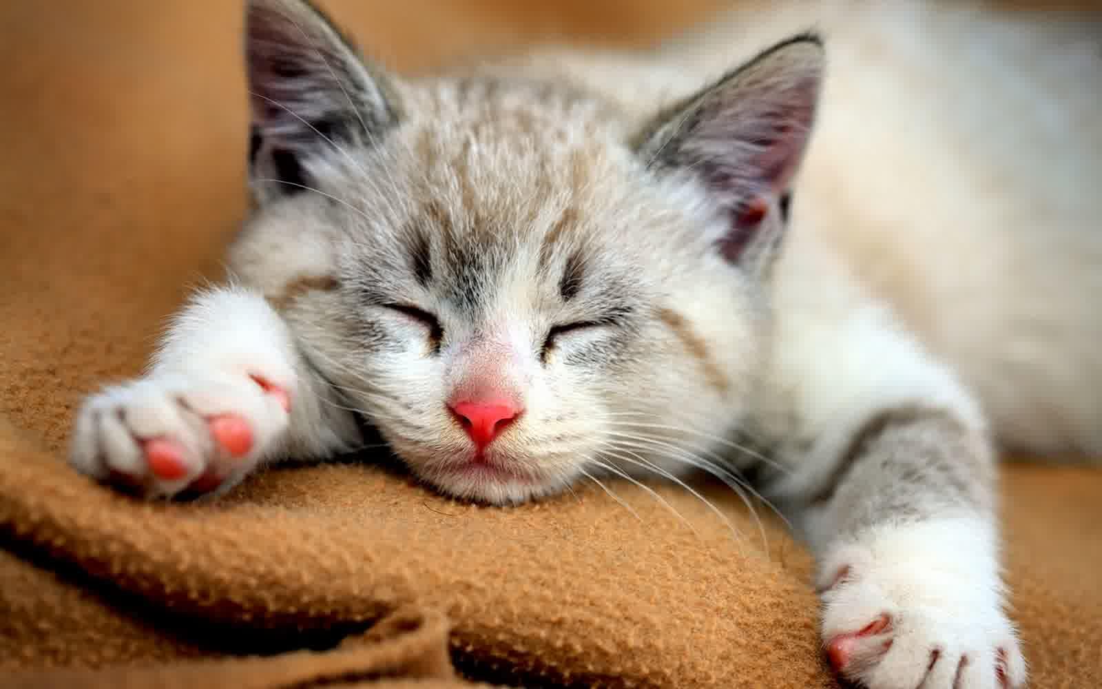 1600x1000 Hình nền Mèo dễ thương
