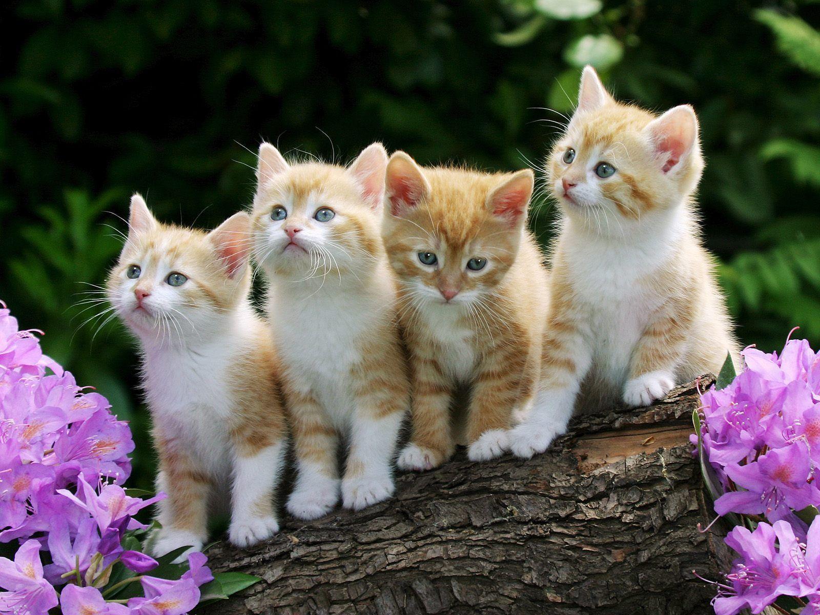 1600x1200 Hình nền mèo con dễ thương Hình nền động vật mèo ở định dạng jpg miễn phí