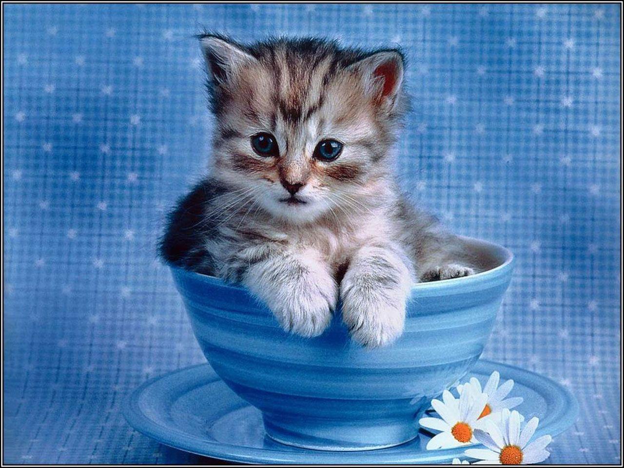 1280x960 Máy tính xách tay dễ thương.  Miễn phí Mèo con cực kỳ dễ thương - mèo