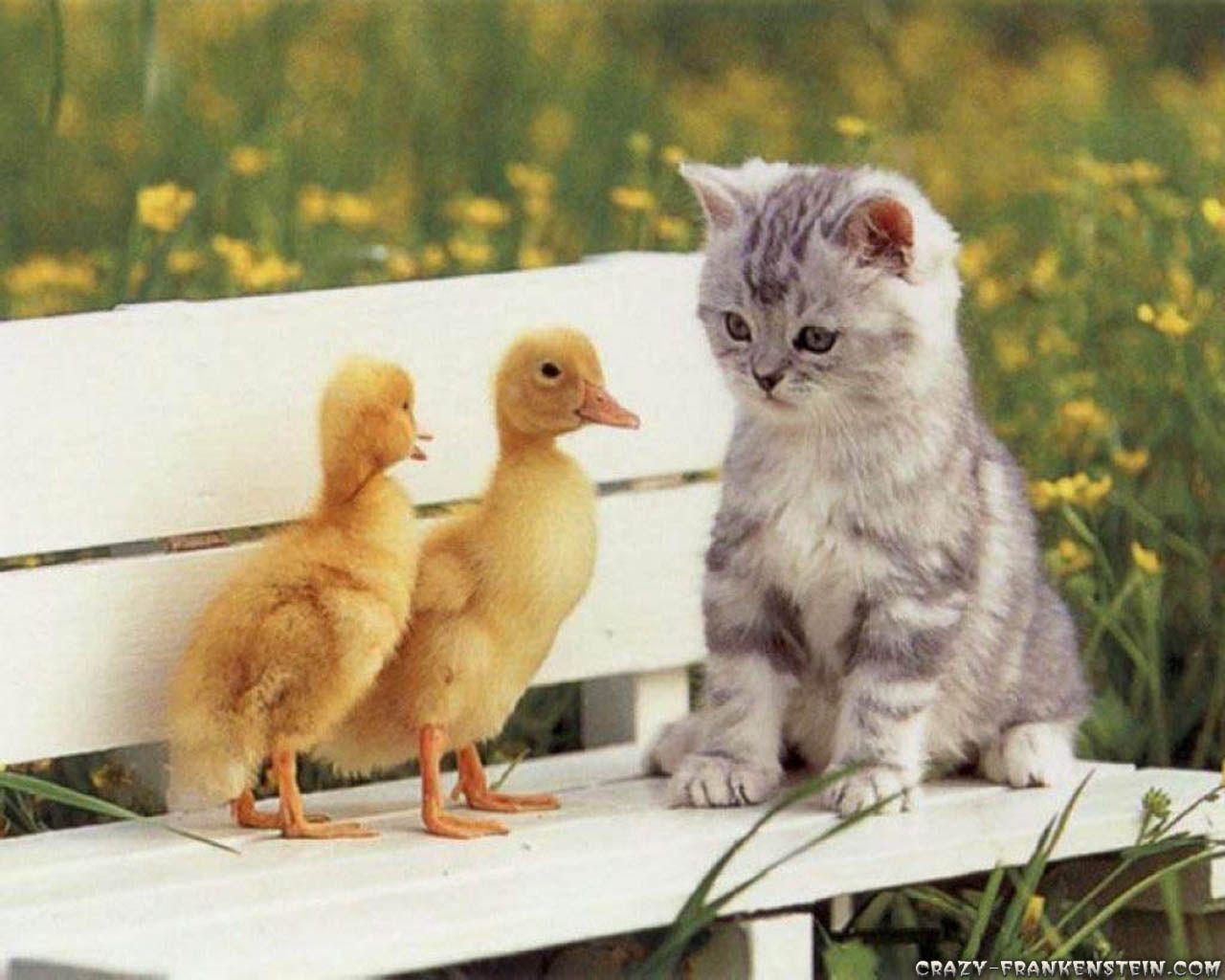 1280x1024 Hình ảnh Hello Kitty: Hình nền Mèo con dễ thương với
