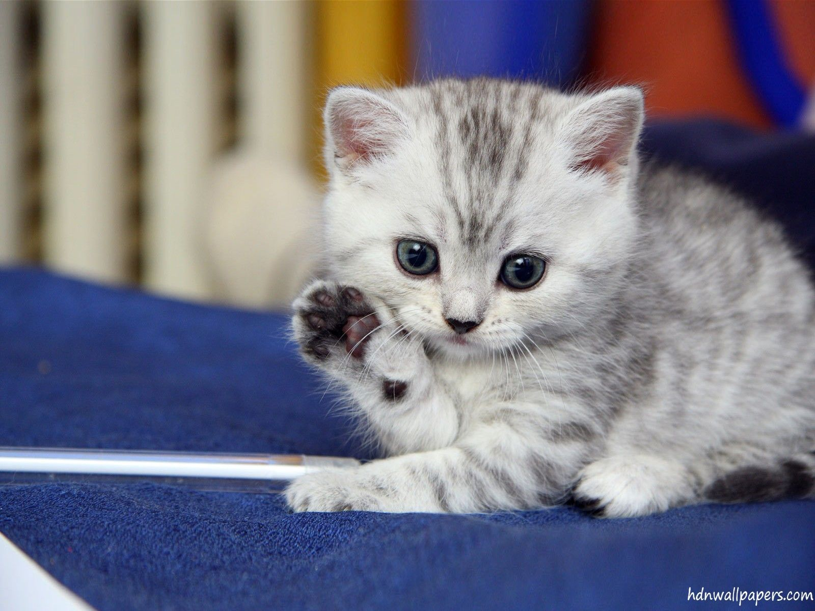 Cute Kitten Wallpapers Top Free Cute Kitten Backgrounds