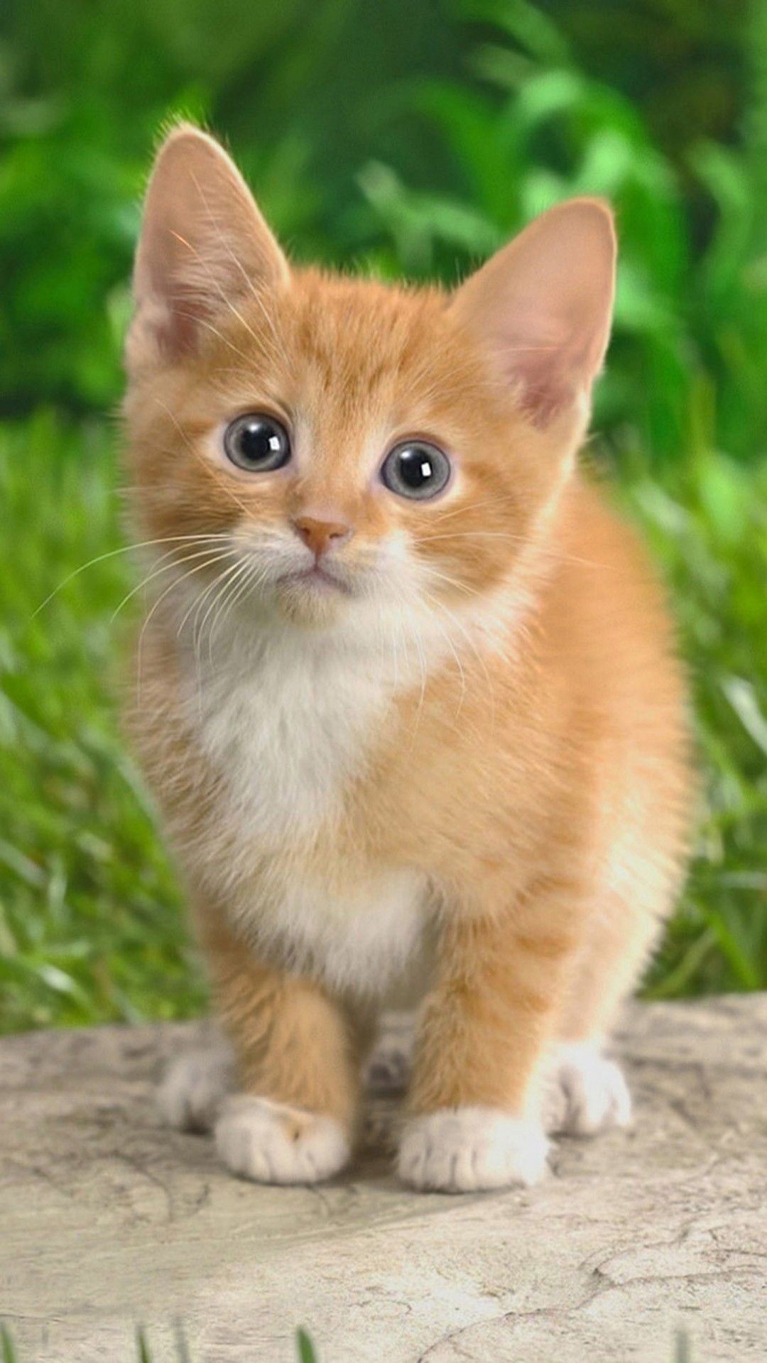 67 Best Free Cute Kitty Wallpapers Wallpaperaccess