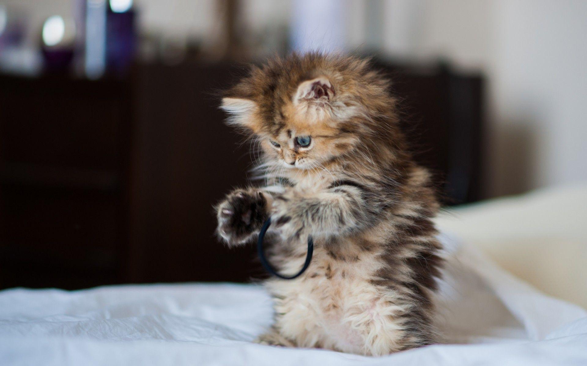 Hình nền mèo con dễ thương 1920x1200