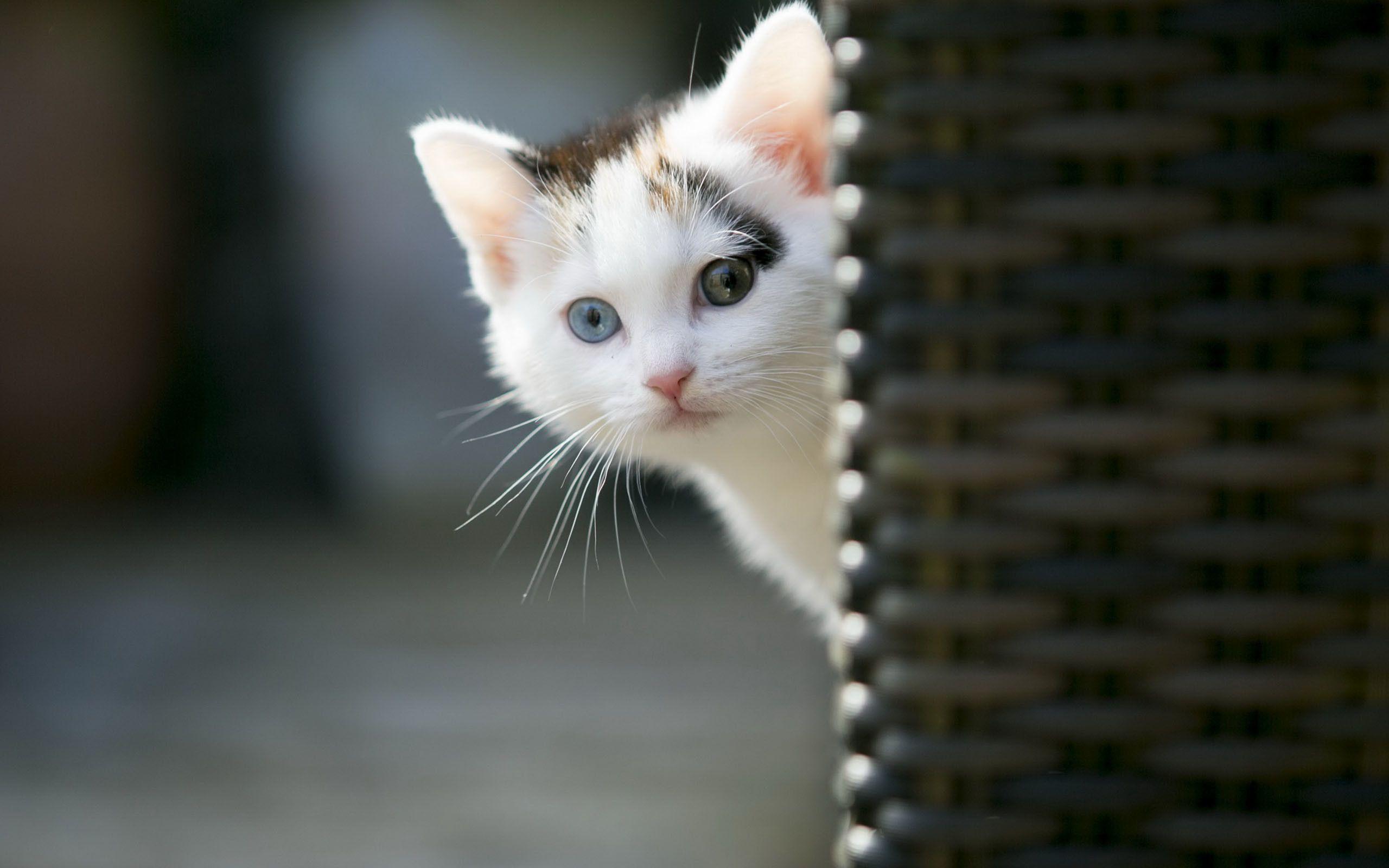 Hình nền Kitty dễ thương 2560x1600
