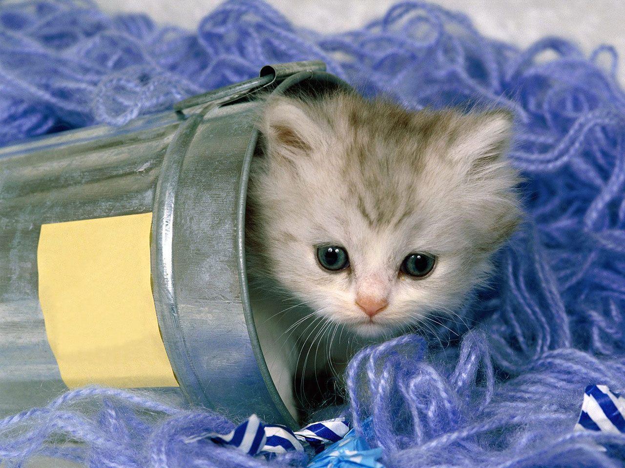 Hình nền mèo 1280x960 - Thư viện hình nền động vật mèo dễ thương