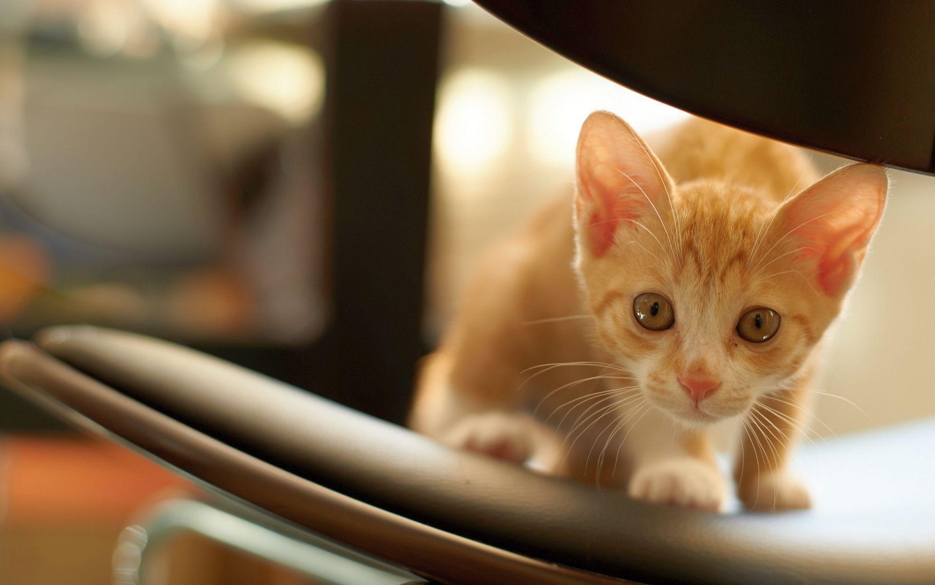 Hình nền mèo con dễ thương 1920x1201 - Hình nền máy tính để bàn HD