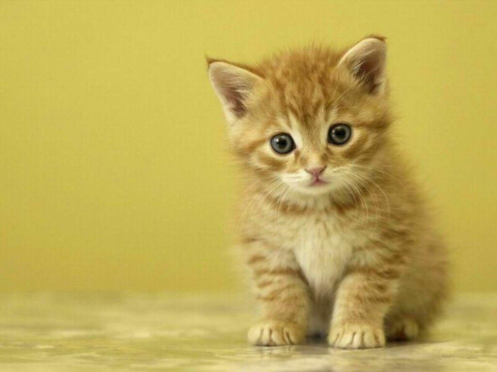 Hình nền Kitty dễ thương 1024x768