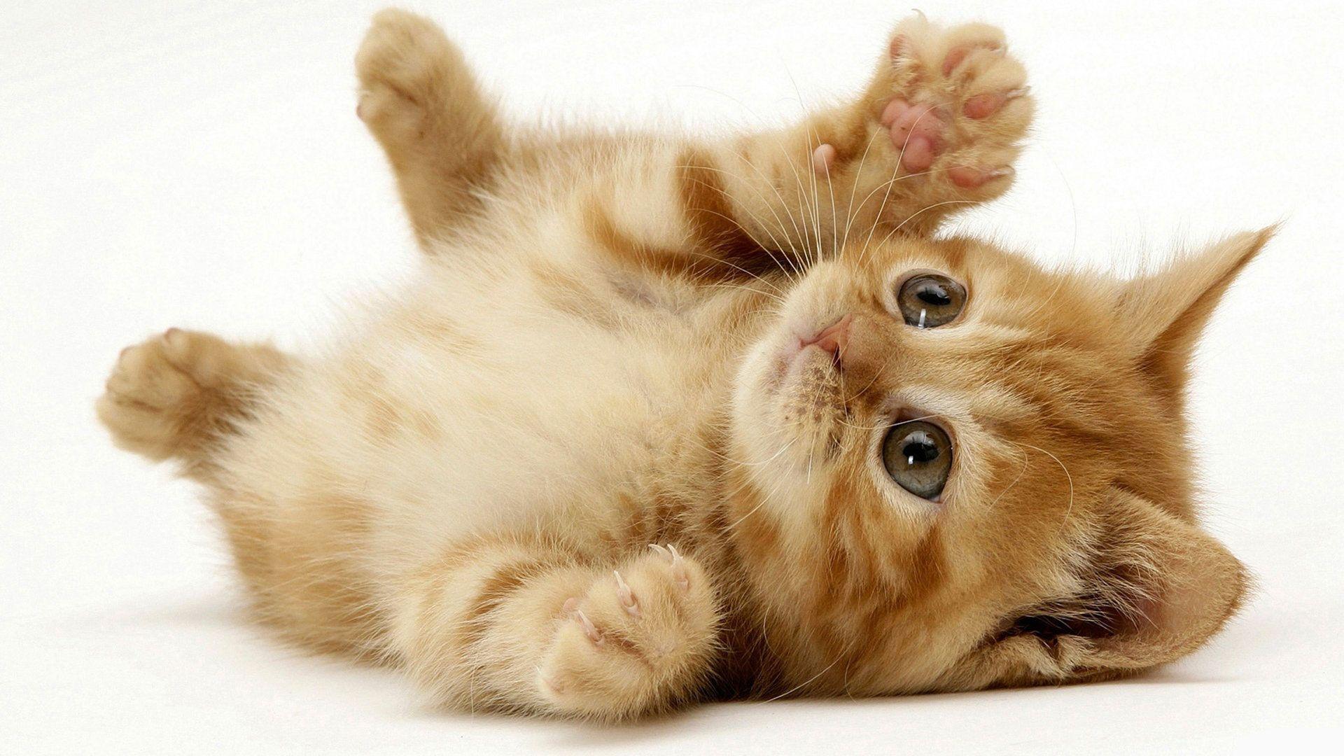 1920x1080 Cute Cats hình nền