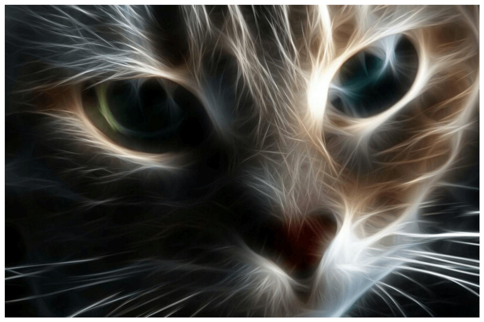 1600x1065 Trung tâm Hình nền Kỳ lạ: Hình nền Máy tính Mèo.  Full HD Kitty dễ thương