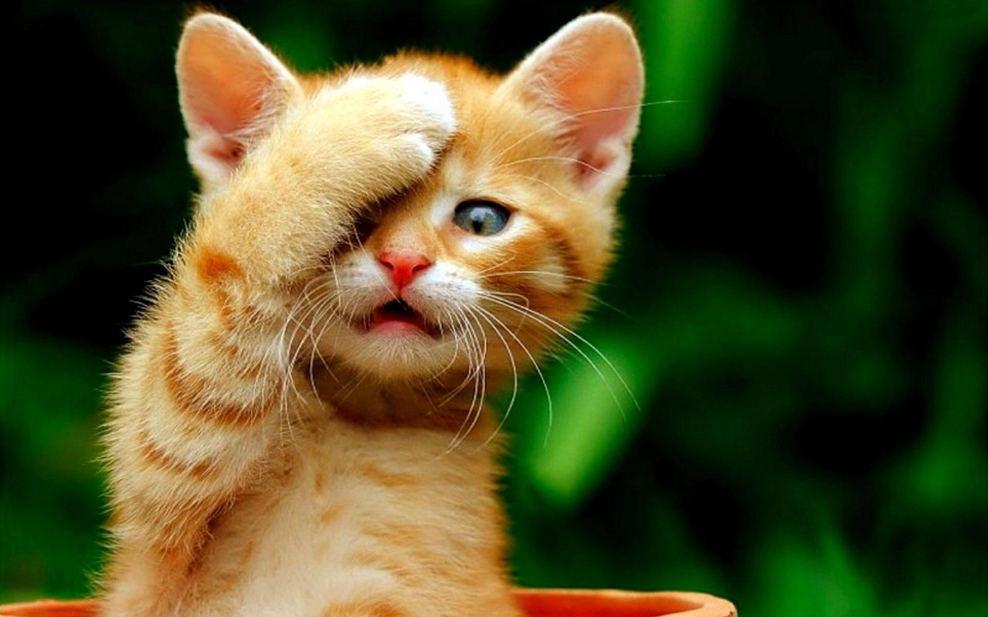 Hình nền những chú mèo dễ thương 1920x1200