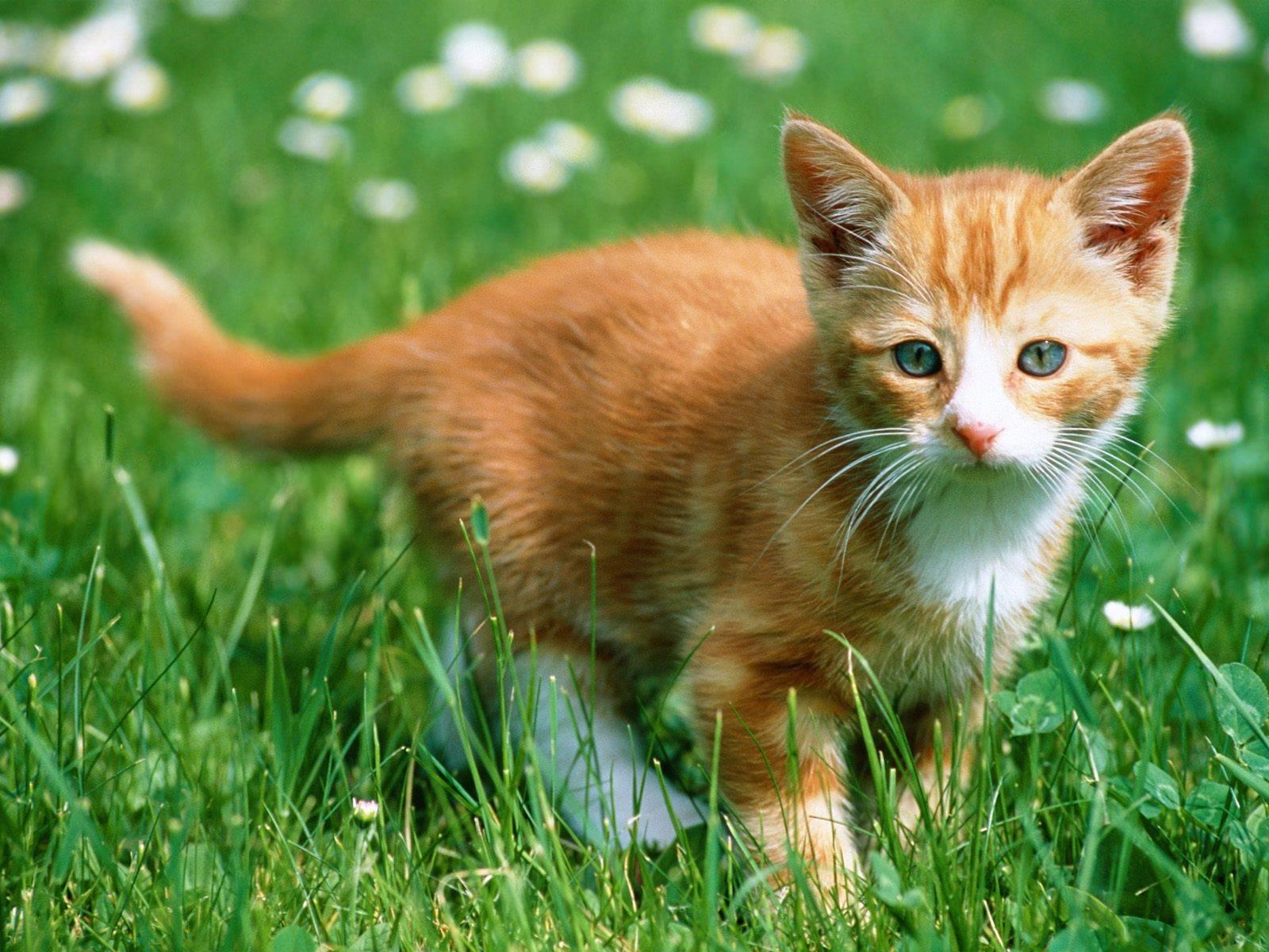 1600x1200 Hình nền mèo con dễ thương