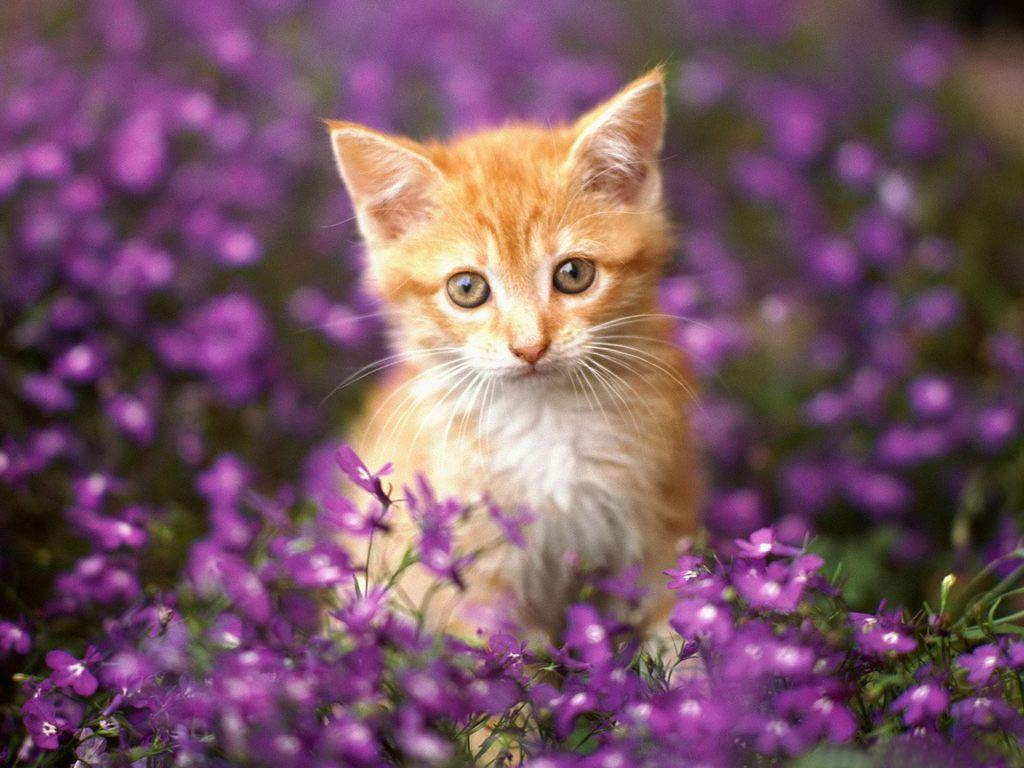 Hình nền 1024x768 Hot Cats - Thư viện hình nền động vật mèo dễ thương