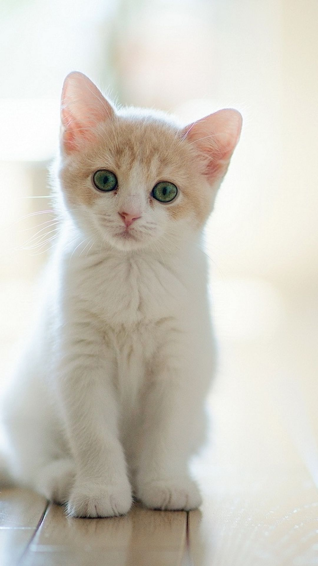 Cute Cat Iphone Wallpapers Top Free Cute Cat Iphone
