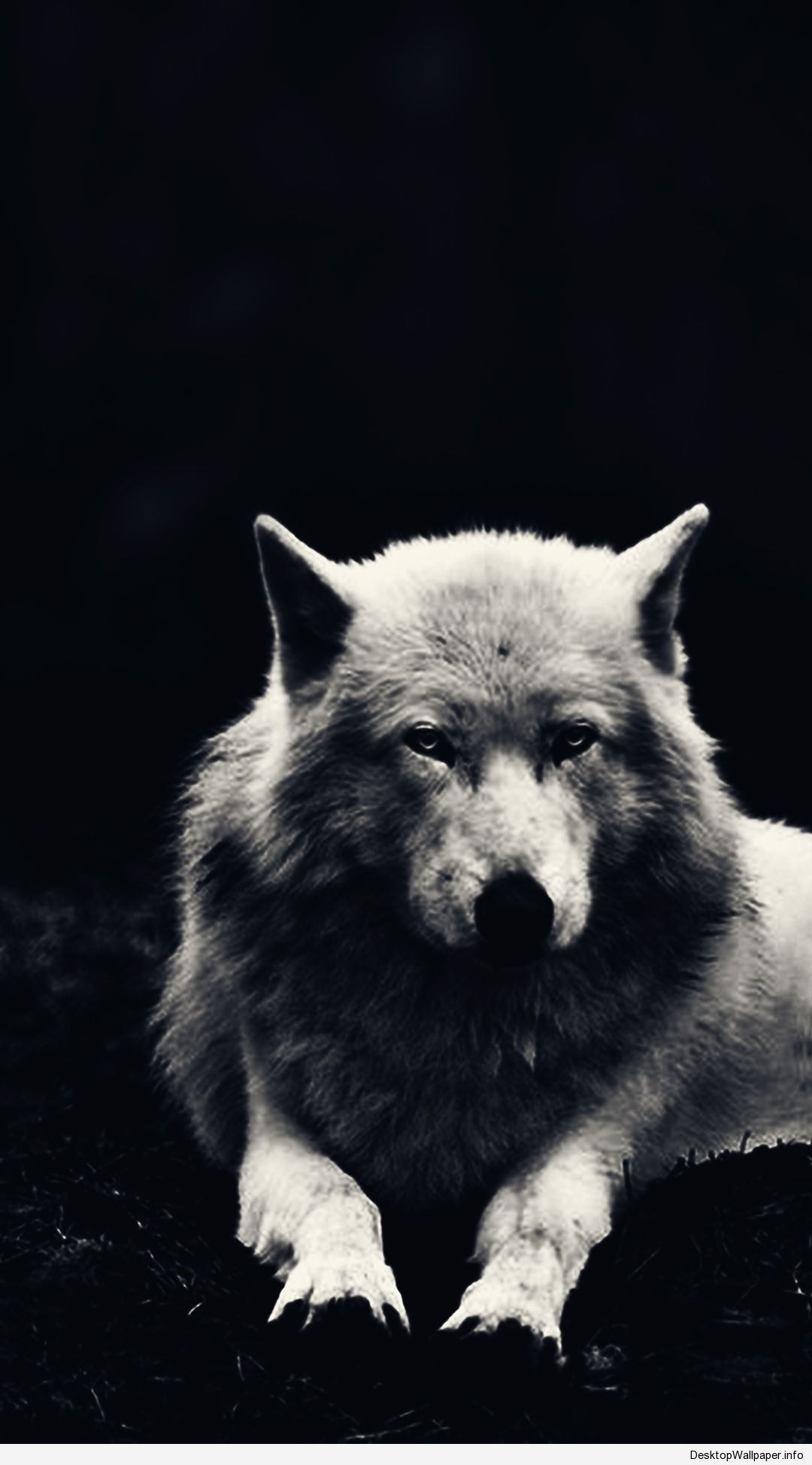 Wolf Hd Phone Wallpapers Top Free Wolf Hd Phone