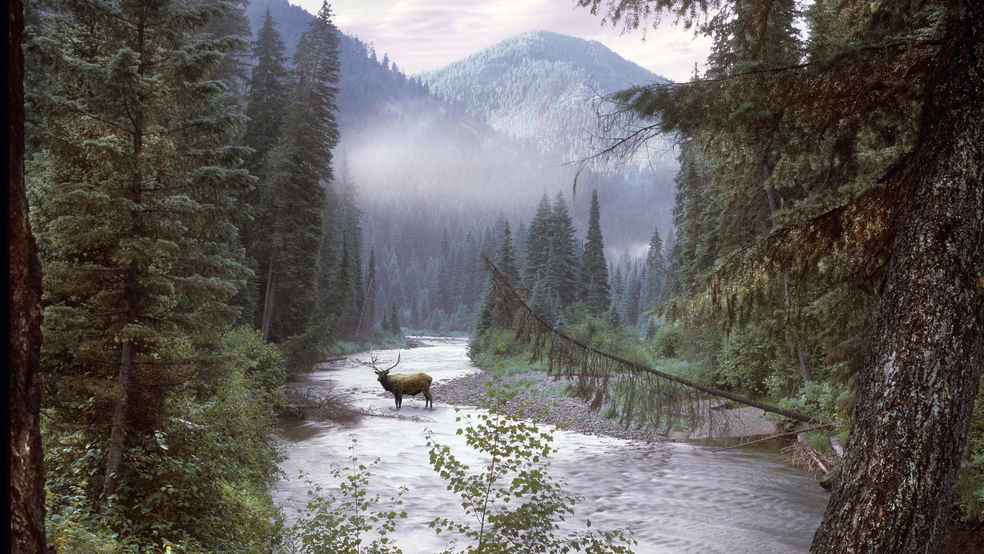 Wilderness Desktop Wallpapers Top Free Wilderness Desktop