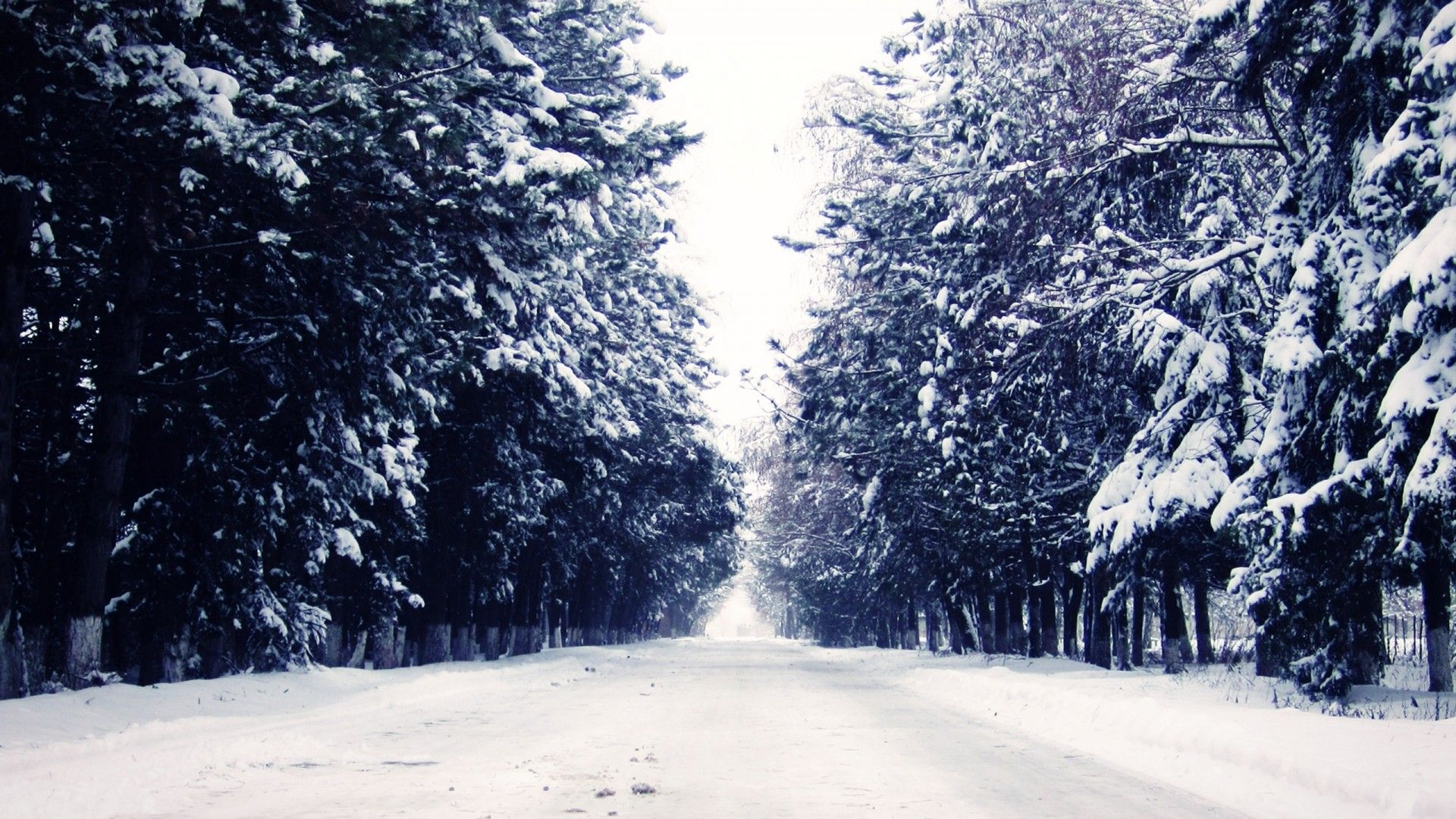 1080P Snow Wallpapers - Top Free 1080P Snow Backgrounds ...