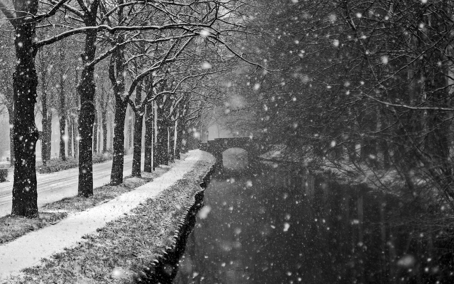 Black And White Winter Wallpapers Top Free Black And White