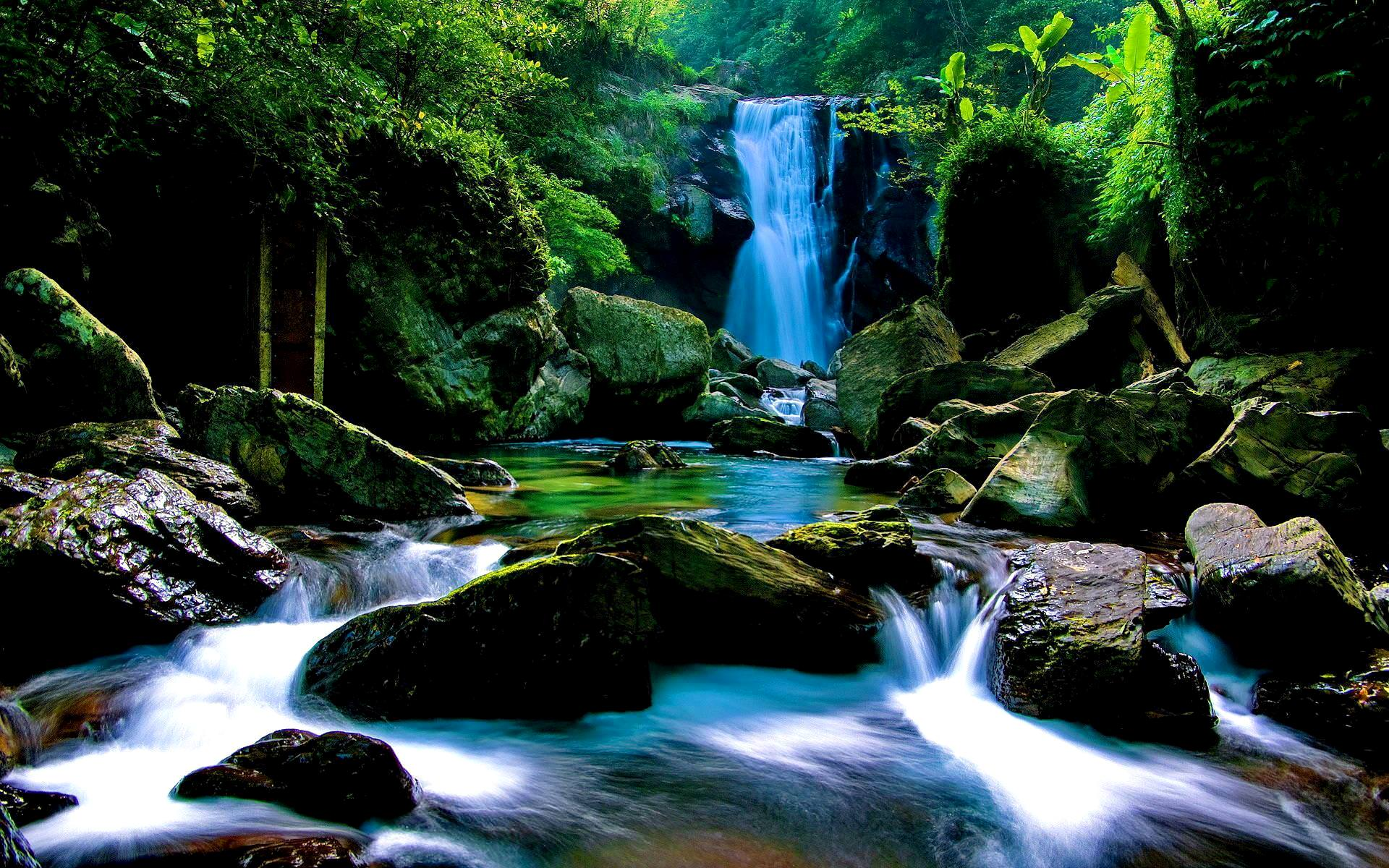 Forest Waterfall Wallpapers Top Free Forest Waterfall Backgrounds Wallpaperaccess