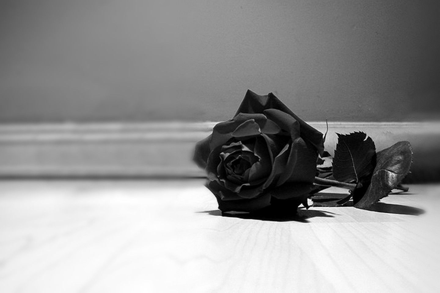 Top Free Black Rose Backgrounds
