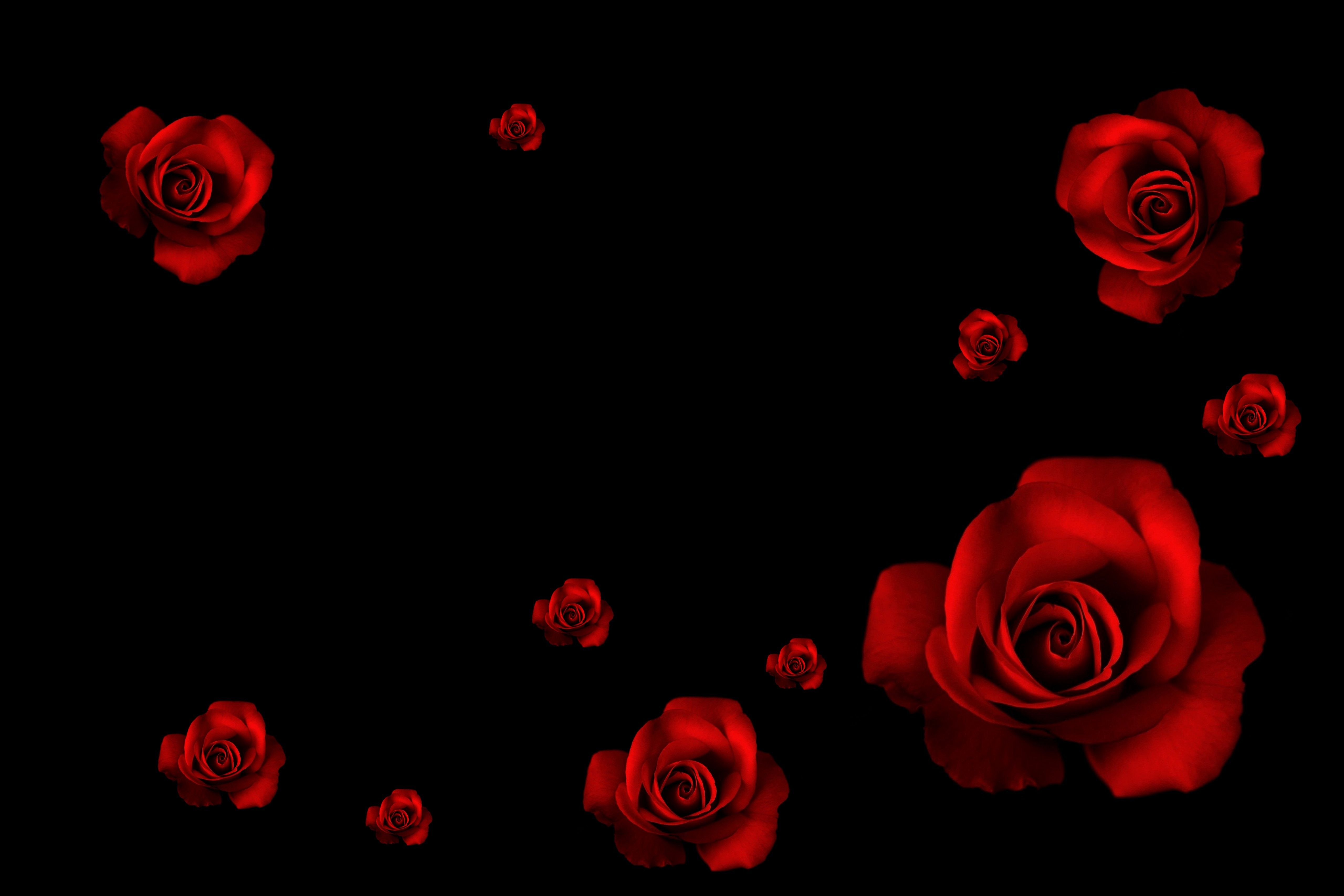 63 Best Free Black Rose Wallpapers