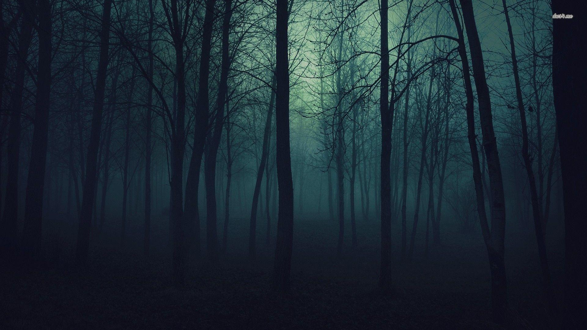 Dark Forest Wallpapers Top Free Dark Forest Backgrounds