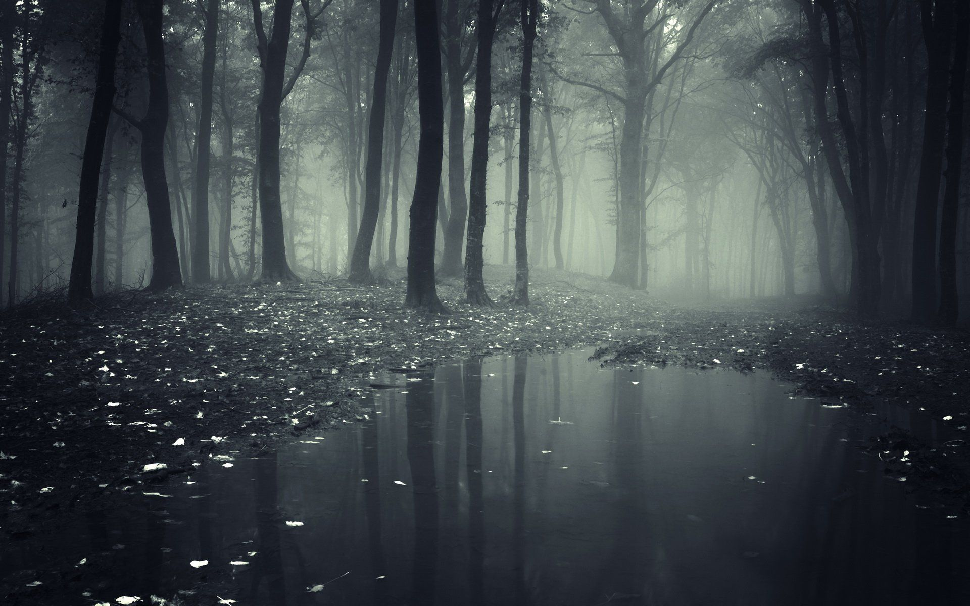Download 300+ Wallpaper Abyss Forest  Terbaru