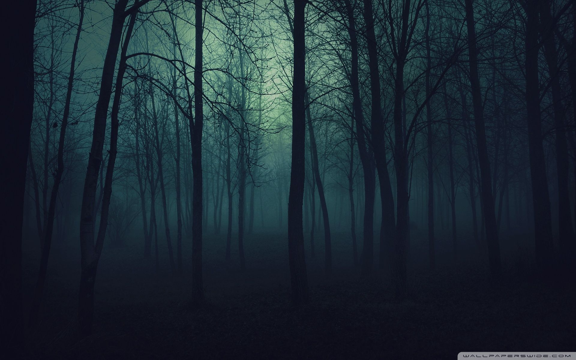 Dark Forest Wallpapers Top Free Dark Forest Backgrounds Wallpaperaccess