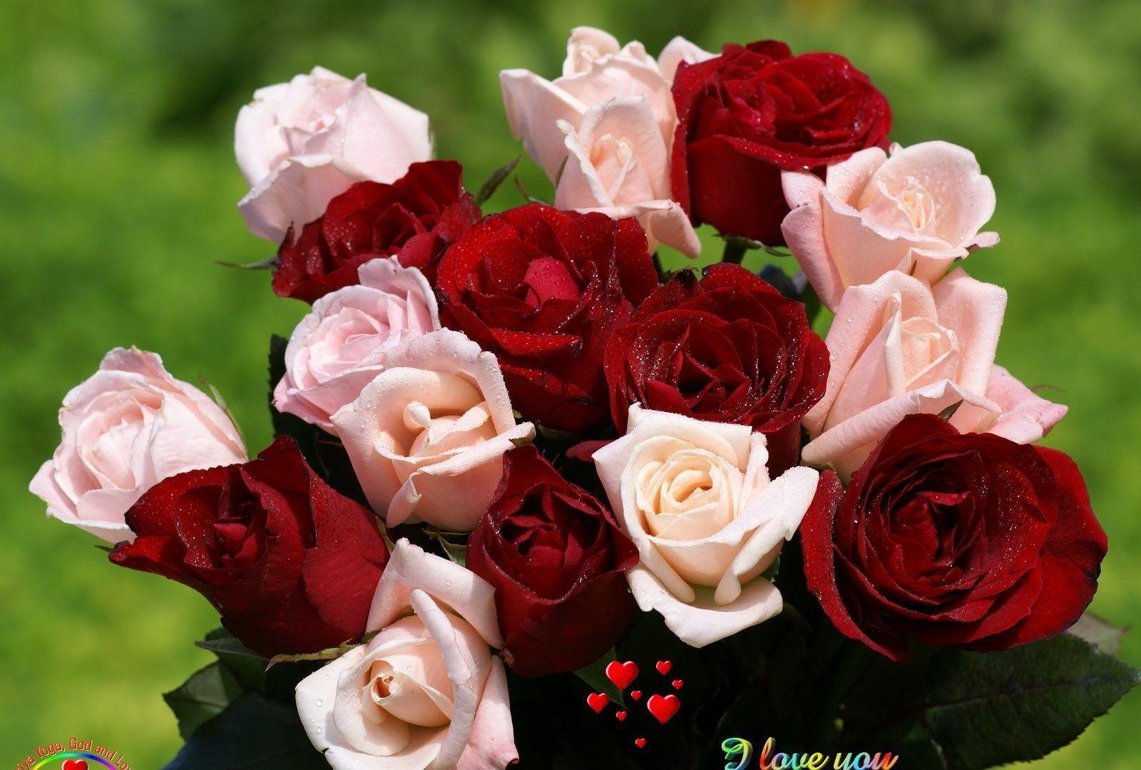 Love Flower Wallpapers Top Free Love Flower Backgrounds Wallpaperaccess