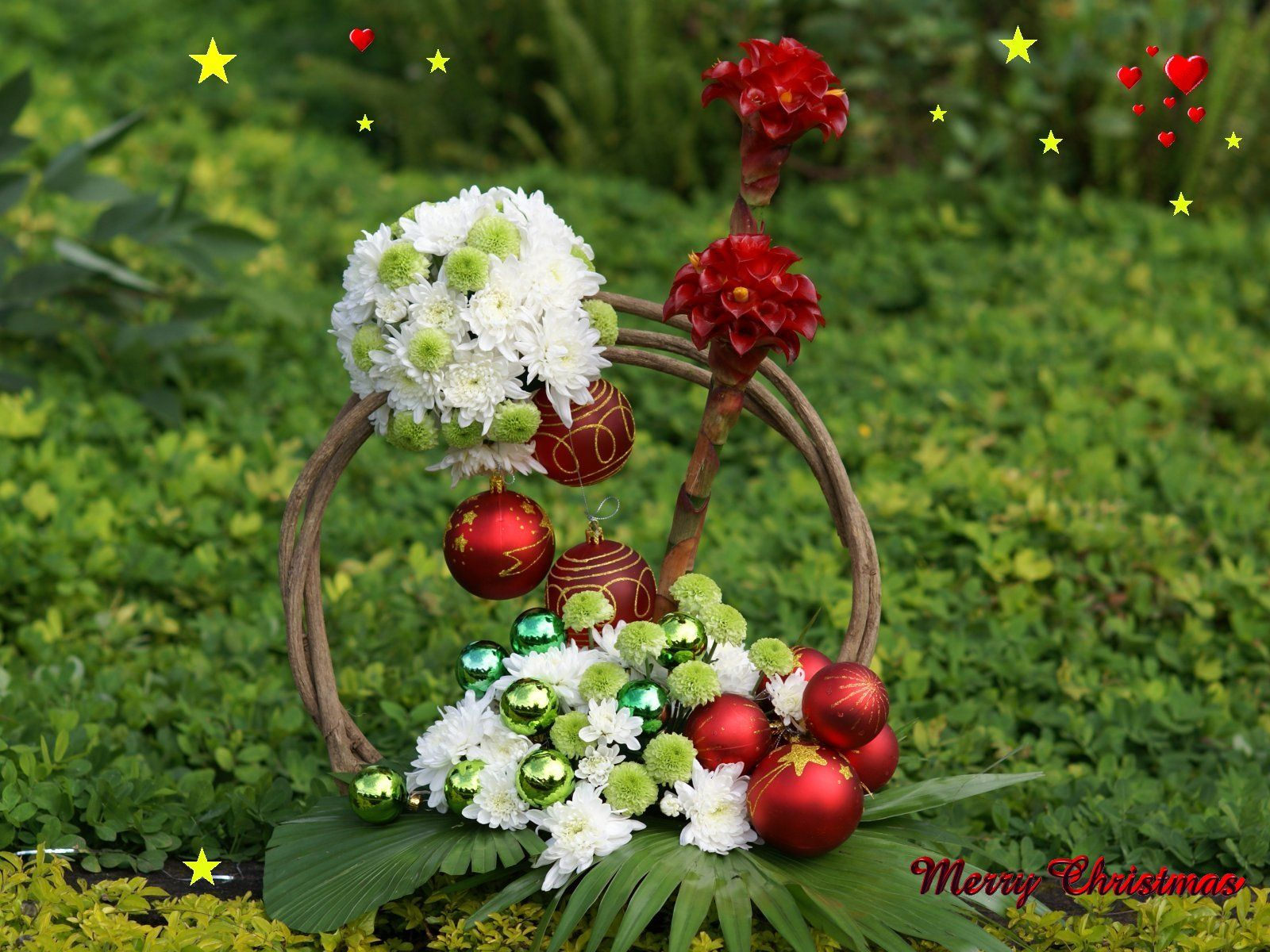 Love Flower Wallpapers Top Free Love Flower Backgrounds