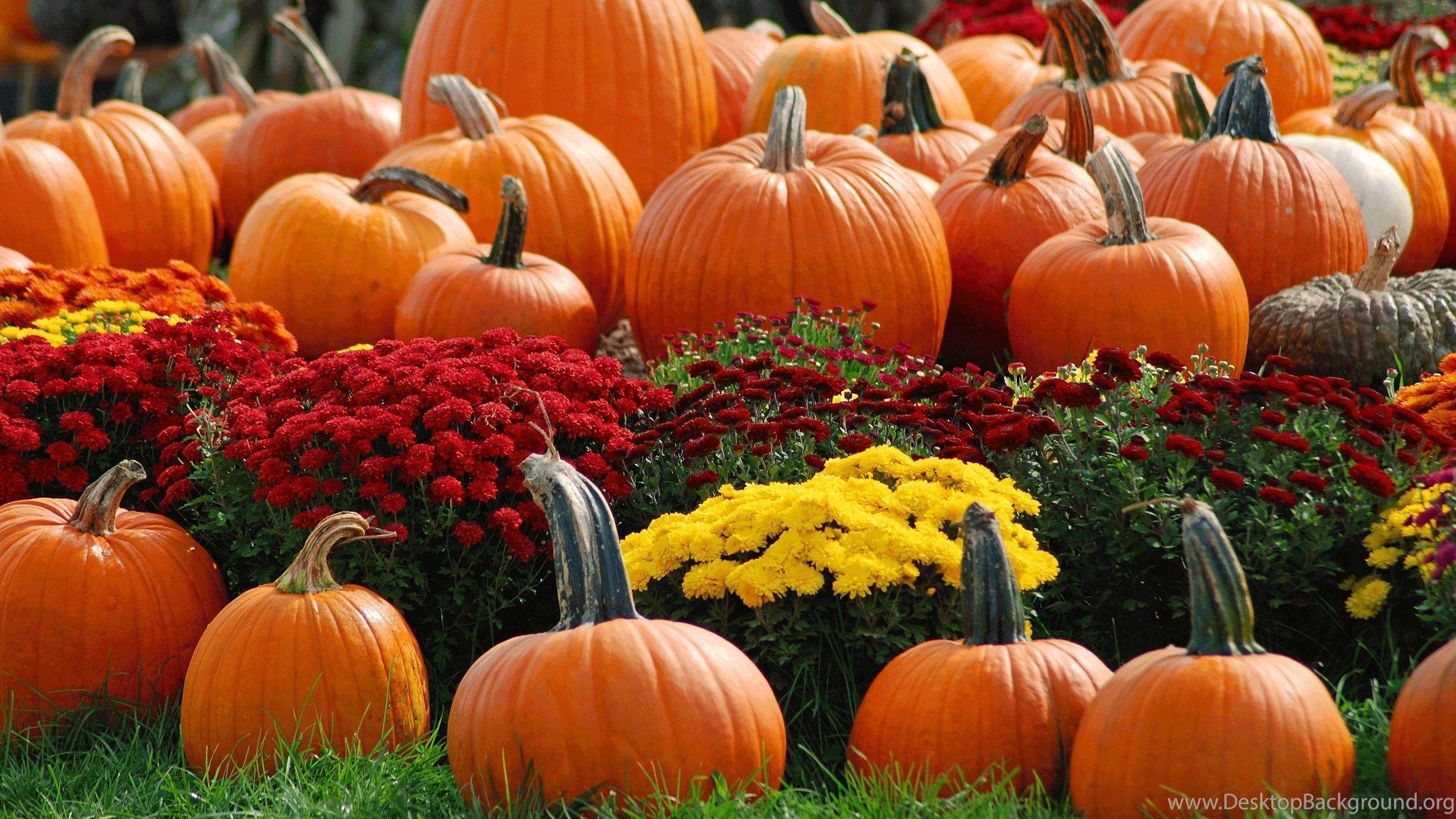 Halloween Pumpkin Wallpaper Iphone.Autumn Pumpkin Iphone Wallpapers Top Free Autumn Pumpkin Iphone