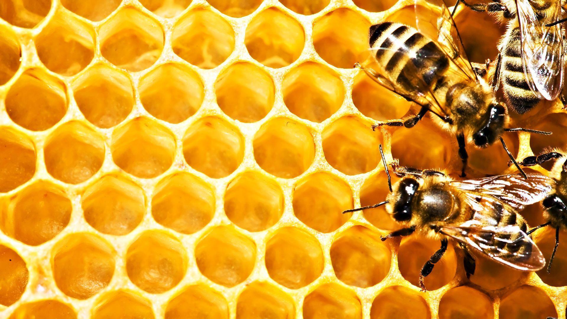 Cute Bee Desktop Wallpapers Top Free Cute Bee Desktop