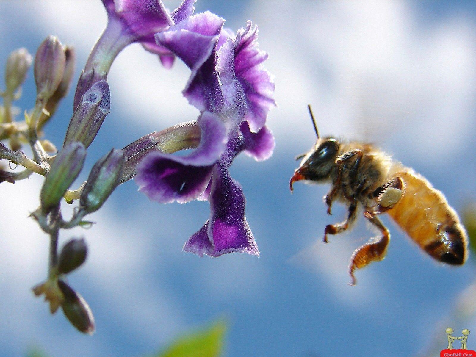 Cute Bee Desktop Wallpapers - Top Free Cute Bee Desktop ...