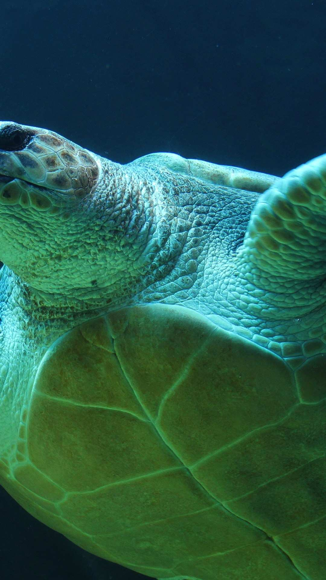 Sea Turtle Iphone Wallpapers Top Free Sea Turtle Iphone