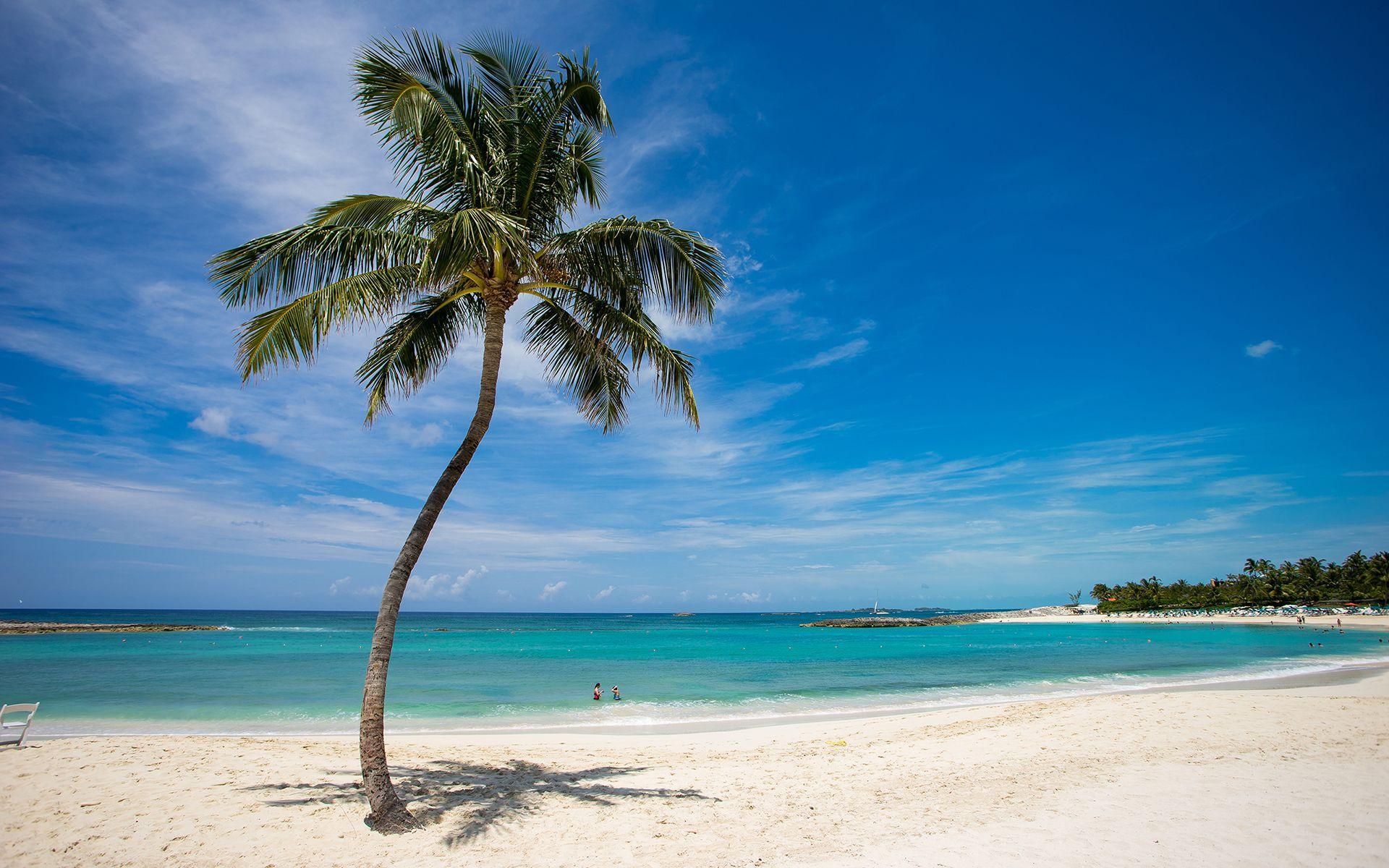 1920x1200 Đảo nhiệt đới Bãi biển Cây dừa Hình nền miễn phí có độ phân giải cao