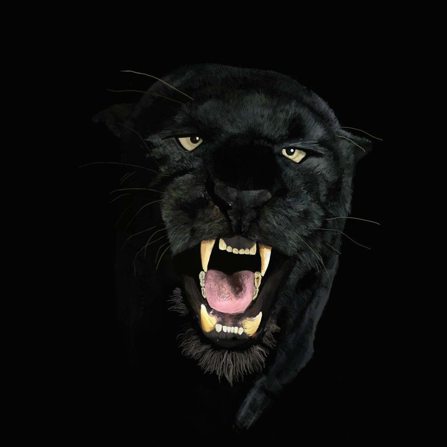Angry Black Panther Animal Wallpapers