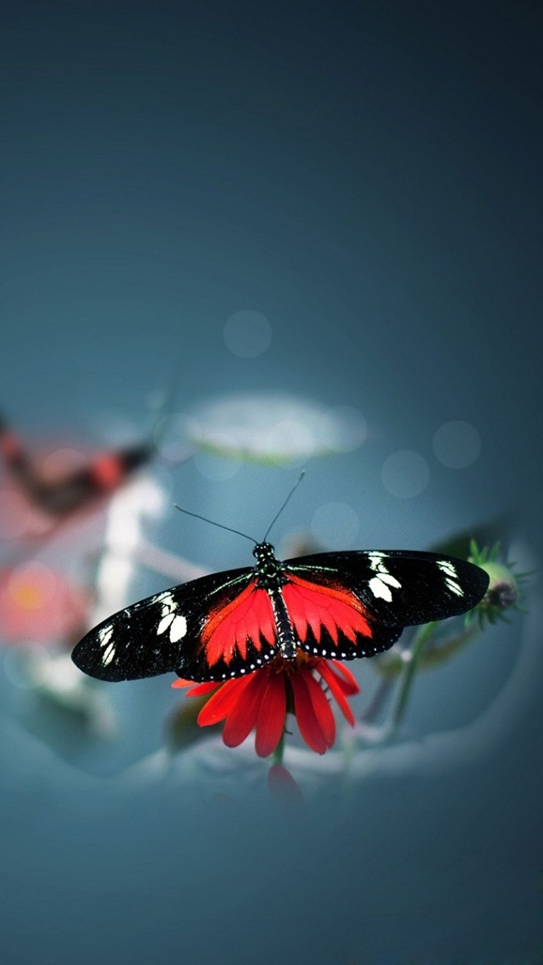 Butterfly Iphone Wallpapers Top Free Butterfly Iphone Backgrounds Wallpaperaccess