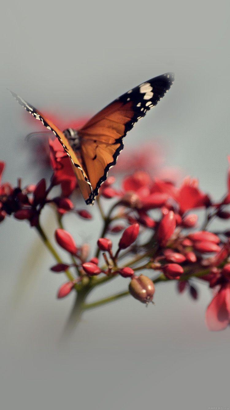 750x1334 iPhone7papers - thiên nhiên bướm hoa màu đỏ