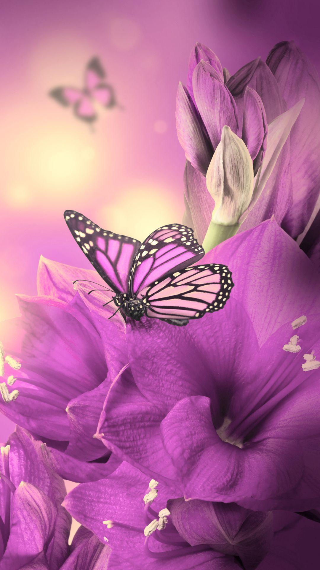 1080x1920 Primula Purple Butterfly Tải xuống Hình nền iPhone 8.  điện thoại Iphone