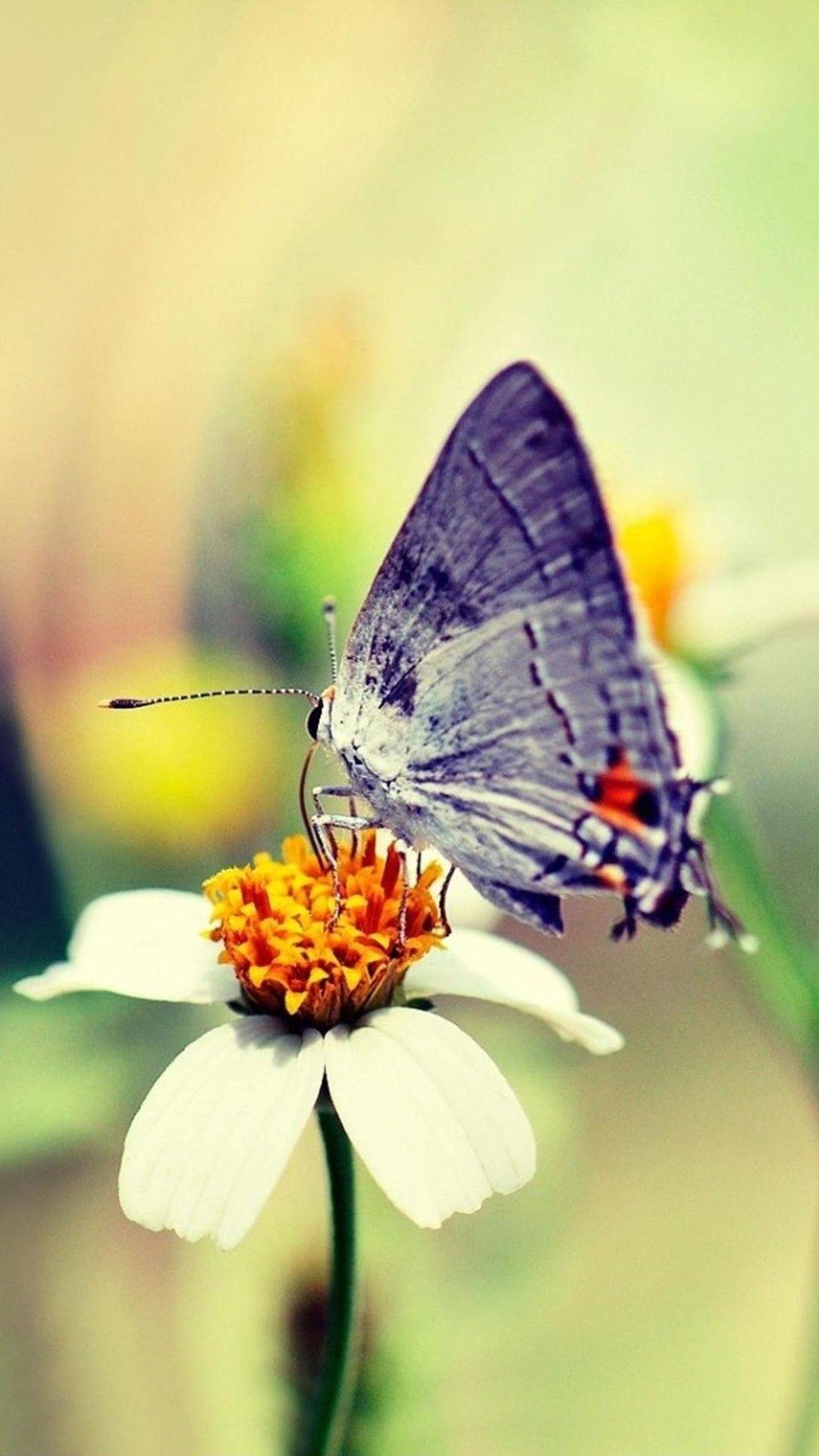 Hình nền con bướm 1080x1920 dành cho Android