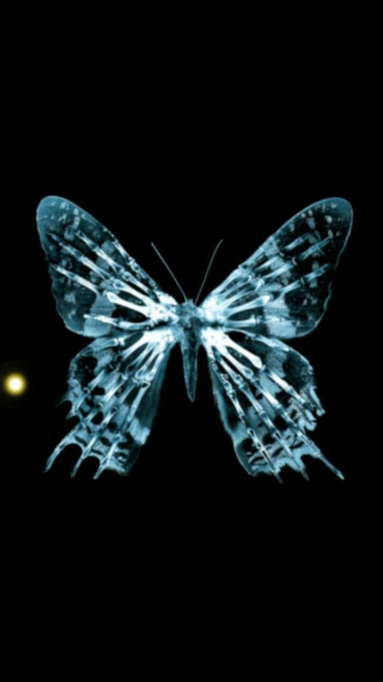 750x1333 Xraying một #butterfly từ #iPhone!  - 3D