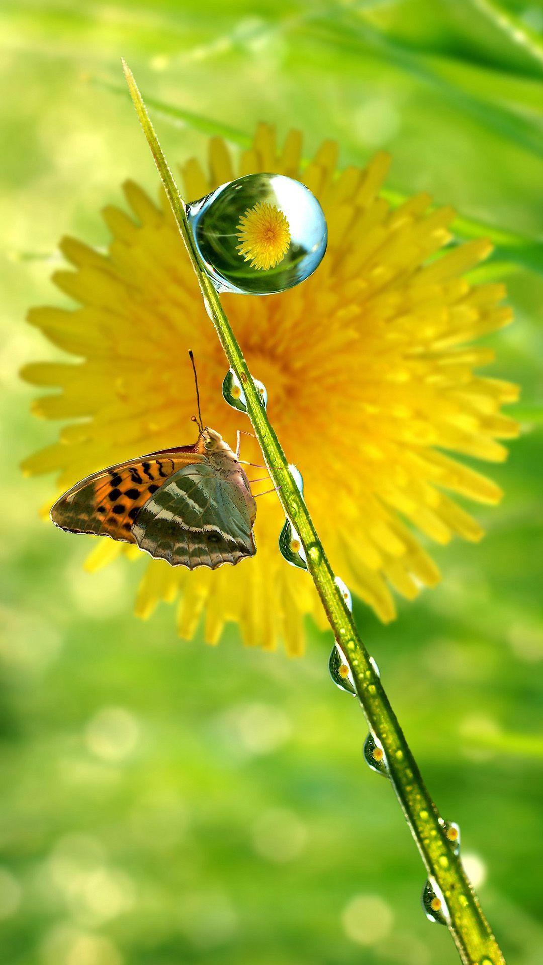 Hình nền con bướm 1080x1920 iPhone