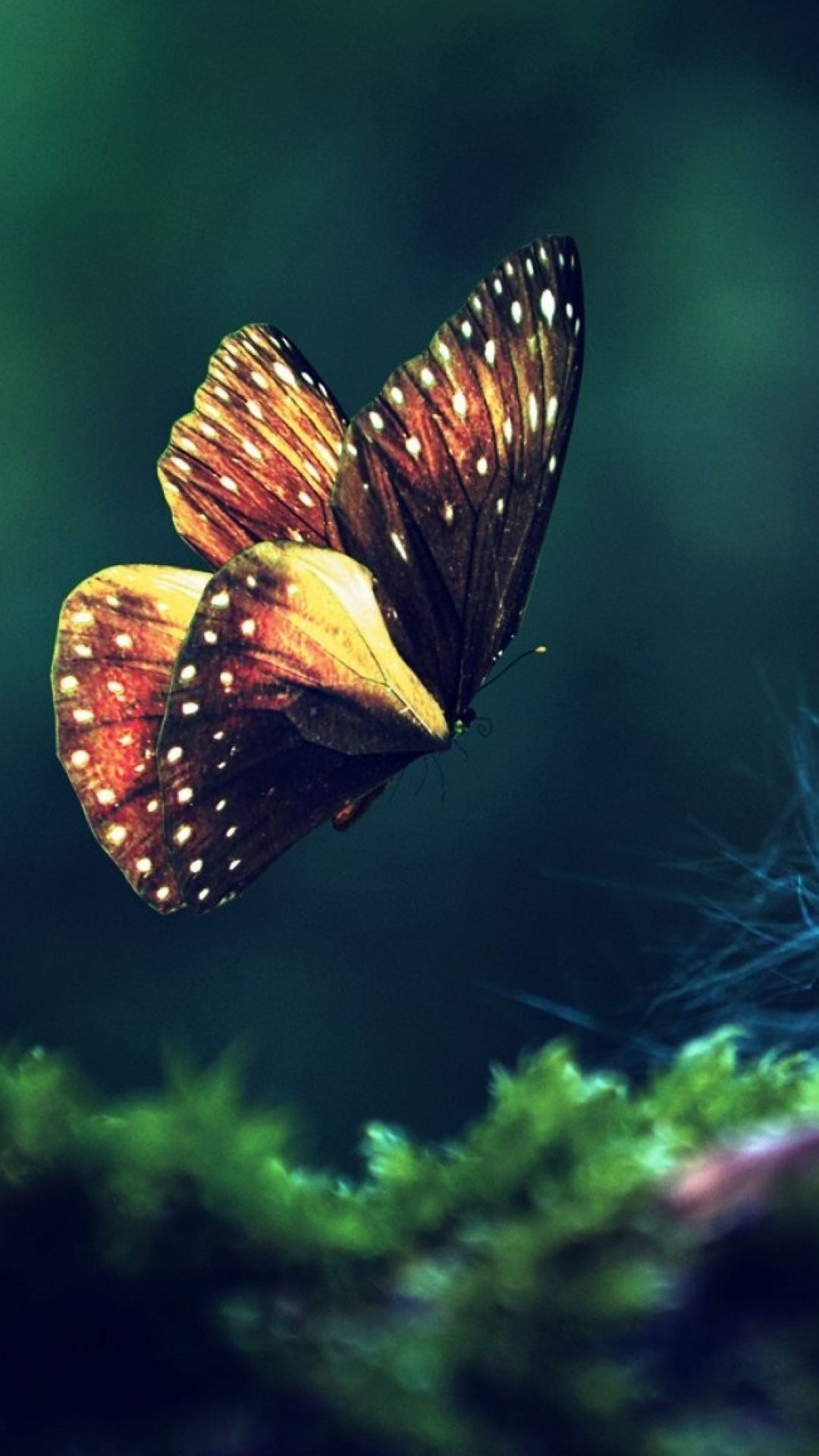 Butterfly Iphone Wallpapers Top Free Butterfly Iphone