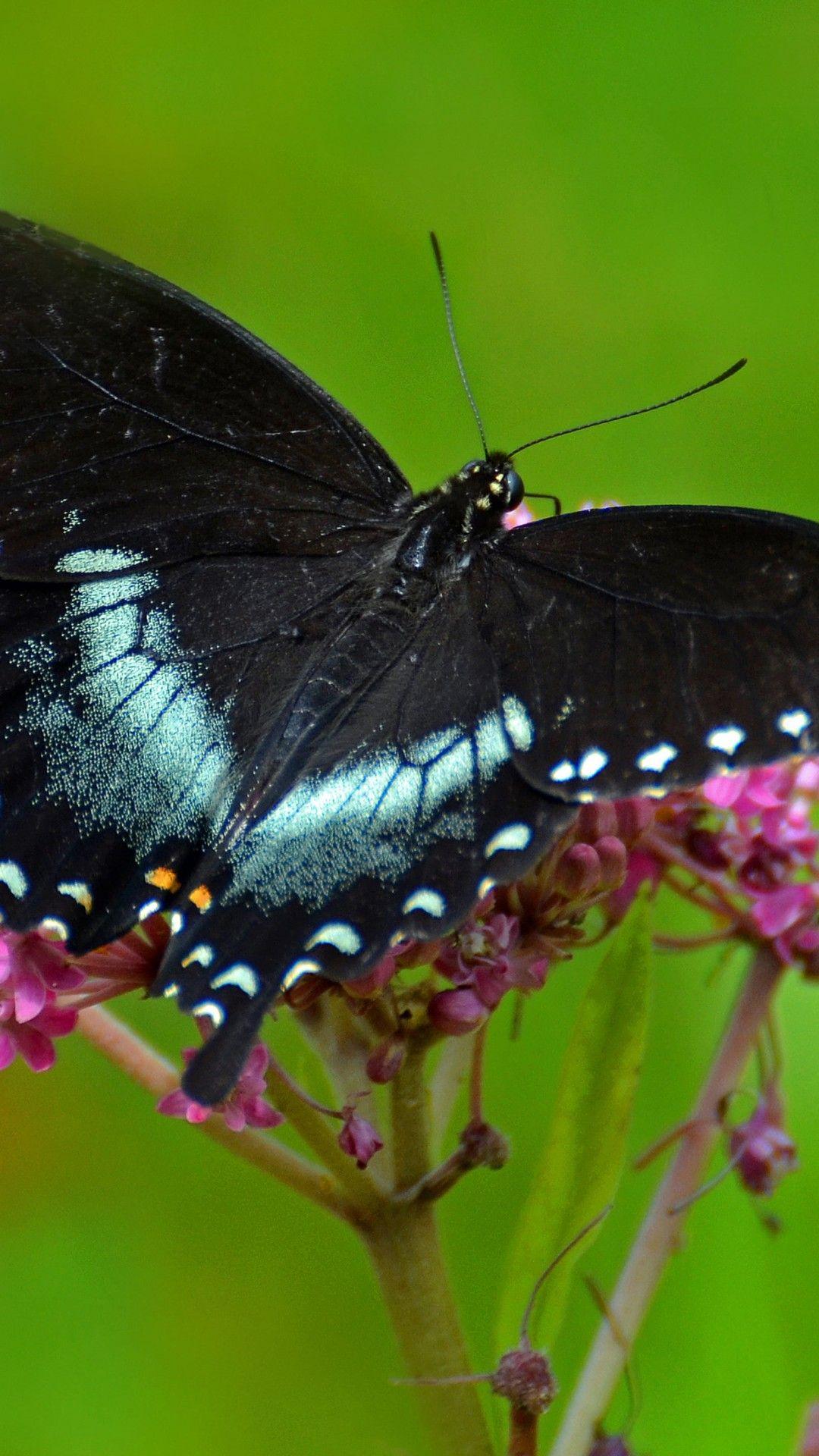 Hình nền tải xuống 1080x1920 1080x1920 Con bướm hồng trong mơ, Con bướm hồng