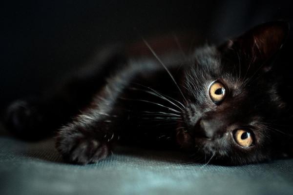 Black Cat Wallpapers Top Free Black Cat Backgrounds Wallpaperaccess